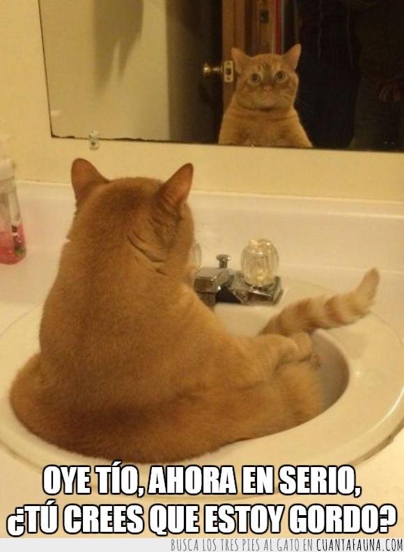 dentro,espejo,esperar,gato,gordo,grifo,mirar,pica,reflejo
