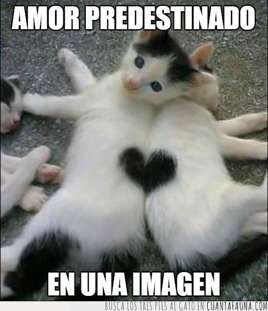 amor,corazon,gatitos,imagen,predestinado