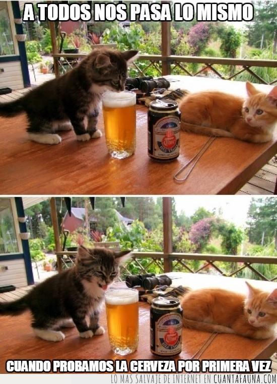 asco,cerveza,gato,lengua,probar
