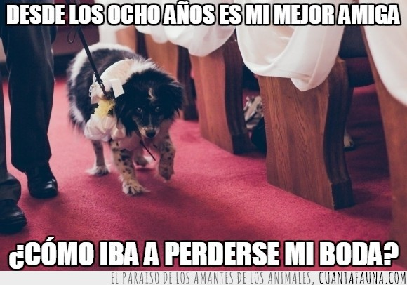 alfombra,amigos para siempre,amistad,boda,can,mascota,perrita anciana,perro