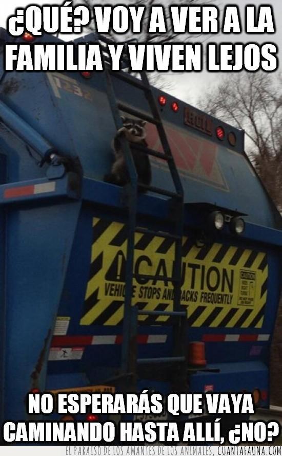 caminar,camion de la basura,mapache,polizon,polizonte,viajar