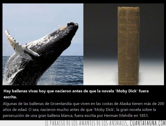 ballena,herman melville,historia,moby dick,tiempo