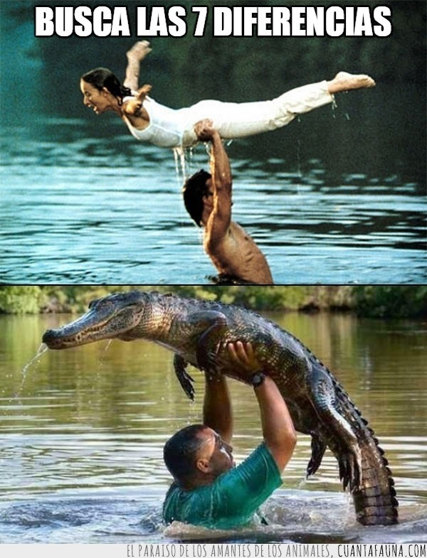 caiman,cocodrilo,Dirty Dancing,levantar,time of my life