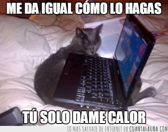 calor,gato,gato debajo de ordenador,gato friolero,ordenador