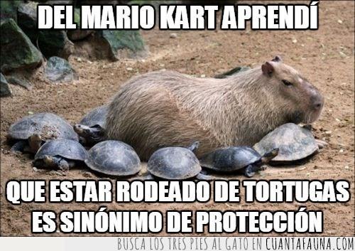 capibara,mario kart,protección,rodeado,tortugas