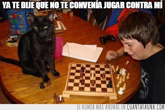 ajedrez,gato,humillar,jugar,niño,paliza,victoria facil