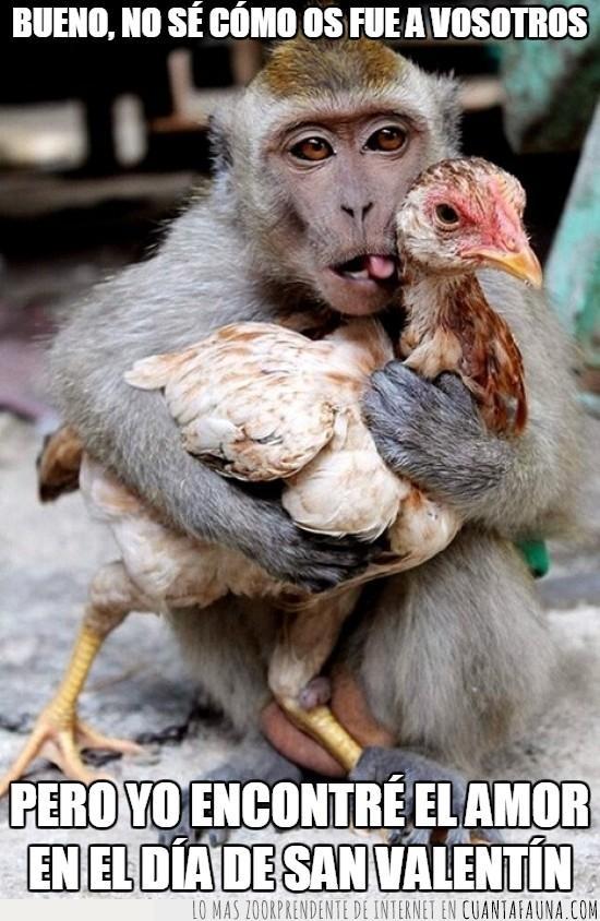amor,encontrar el amor,lengua sensual,mono,pollo,San valentin