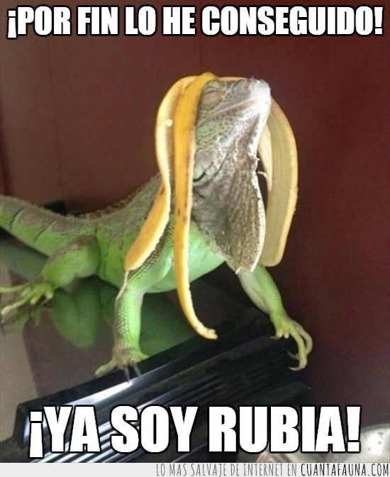 cascara de platano,cumplir su sueño,iguana,lagarto,rubia