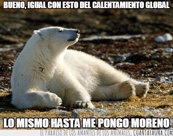 calentamiento global,moreno,oso polar,tomar el sol