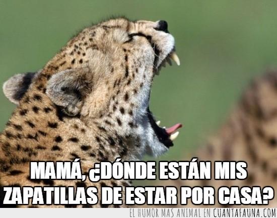gritar,grito pelao,guepardo,mama,zapatillas de estar por casa
