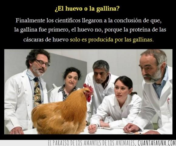 ave,cascarón,científicos,corral.blanquillo,embrión,estudios,gallina,huevo,proteina,quien primero