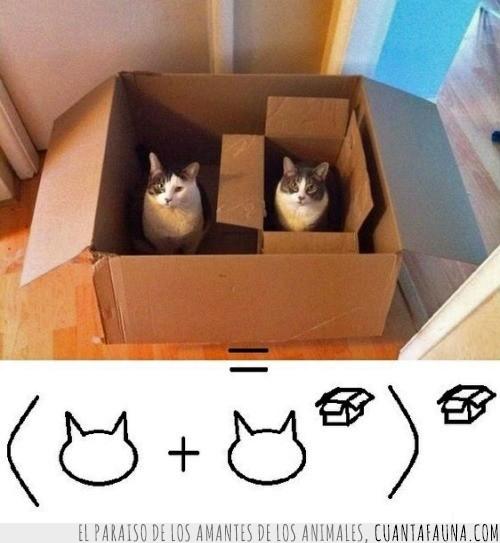 cajas,gatitos,matematicas,resuelva la ecuación,resultado