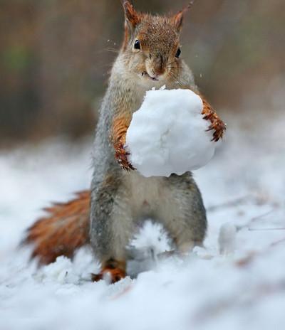 24335 - Disfrutar de la nieve no es solo cosa de humanos
