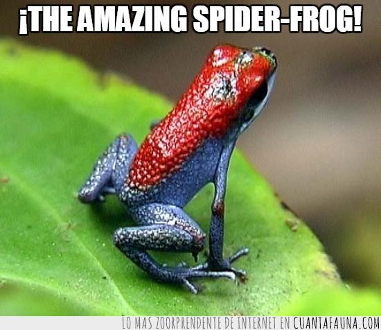 colores,rana,sensual,spider-man,spiderman,venenosa