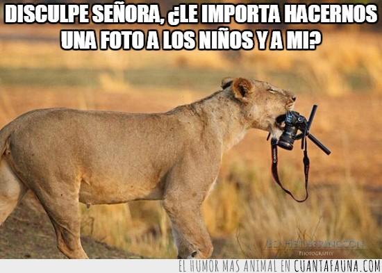 camara de fotos,de turismo,hacer una foto,leon,leona,llevarse,robar