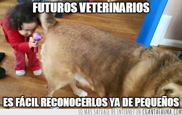 can,cola,curiosidad,duela,examinar,fututo,lámpara,niña,perro,veterinaria,veterinario