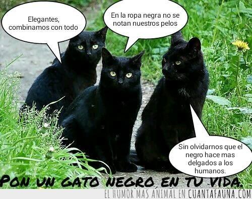 adoptar,gato,gatos,negro,pelo,pelos,ropa,suerte,vida