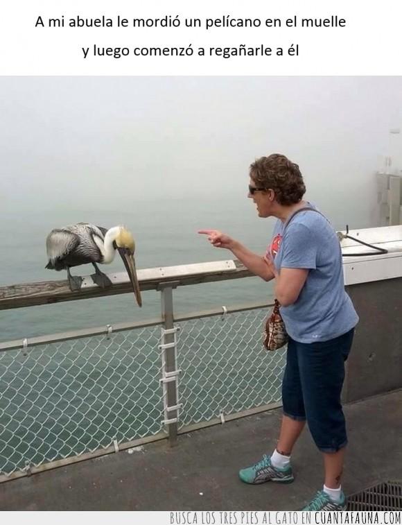 abuela,ave,bronca,muelle,pelicano,reñir,señora,triste