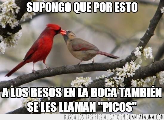aves,beso,besos en la boca,mucho amor,pajaros,picos,por la comida