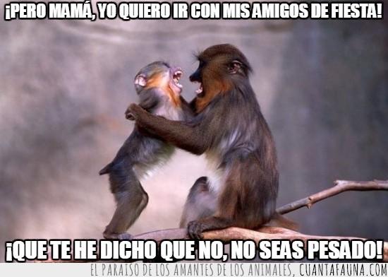 enfadarse,hijo,madre,monos,quejarse,querer ir de fiesta