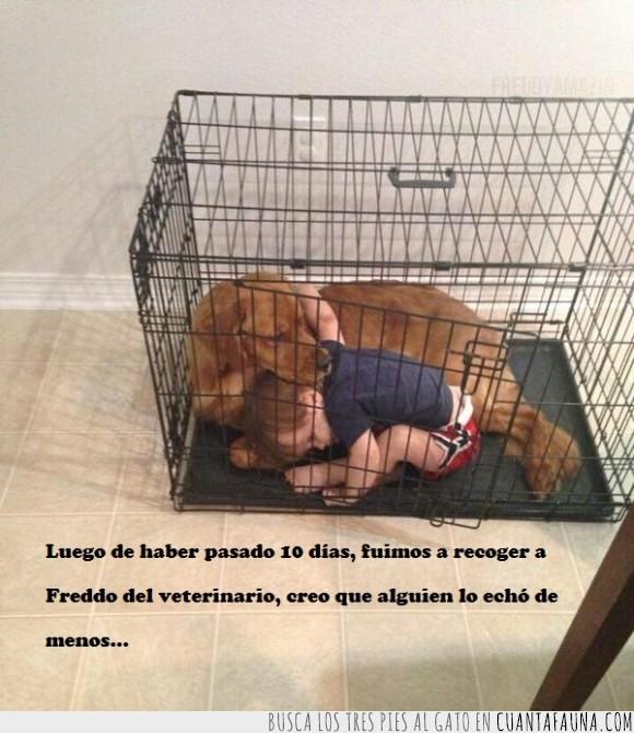 amigo,echar de menos,entrar,jaula,niño,perro,veterinario