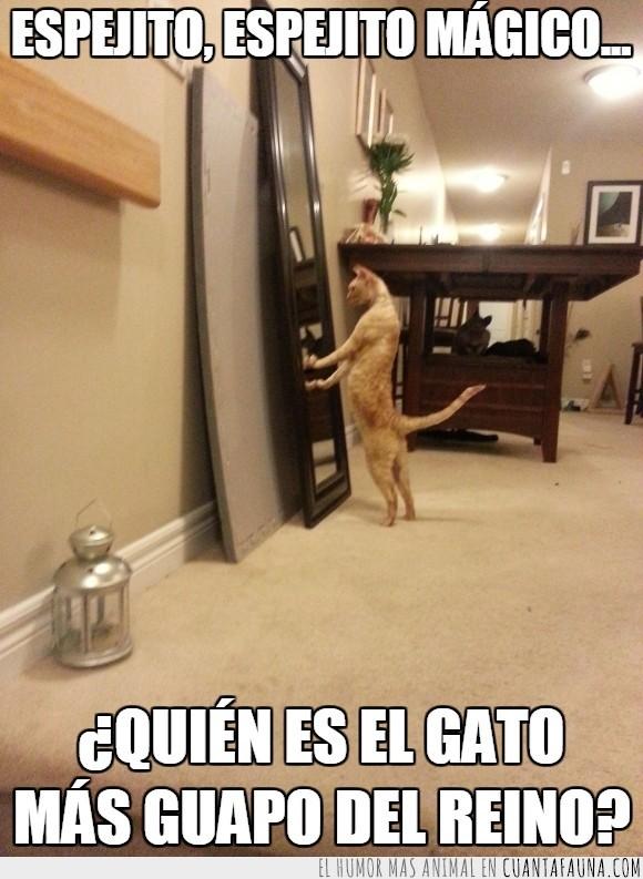 alfombra,felino espejo,gato,guapo,madre,mirada,razon,reflejo,sorpresa