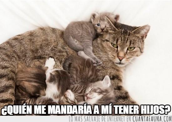 amor de madre,cats,familia,gatitos,gato,hijos,kittens,pobre,todos merecemos un descanso
