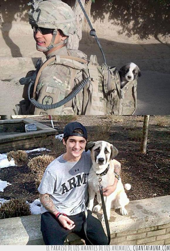 cachorro,guerra,peligro,perrete,perro,salvar,soldado