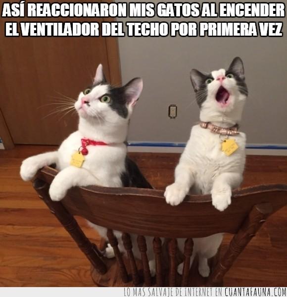 asombro,blanco,cara,expresión,gatos,silla,sorpresa,ventilador