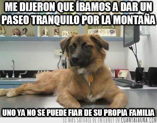 engañar,engaño,humanos,montaña,paseo tranquilo,perro,timar,veterinario