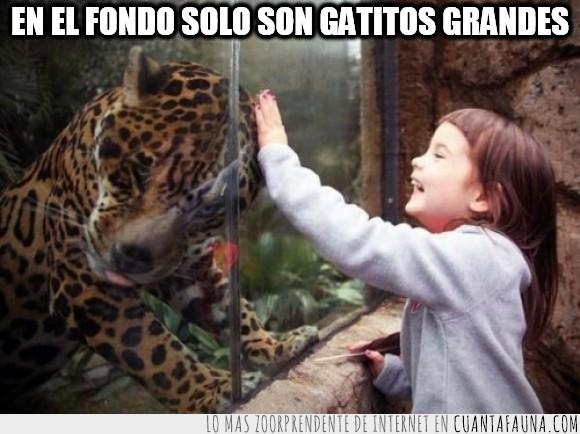 acariciar,animal,felino,gato,inocente,jaguar,leopardo,niña,pequeña,tocar,zoo