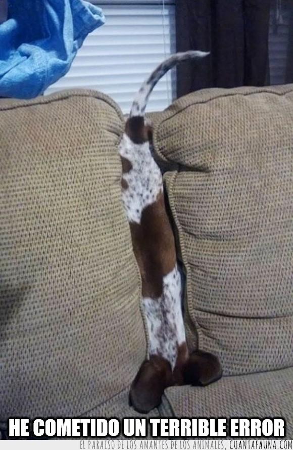 atrapado,cachorro,can,cojínes,escondido,escondite,medio,perro,sillón,sofá