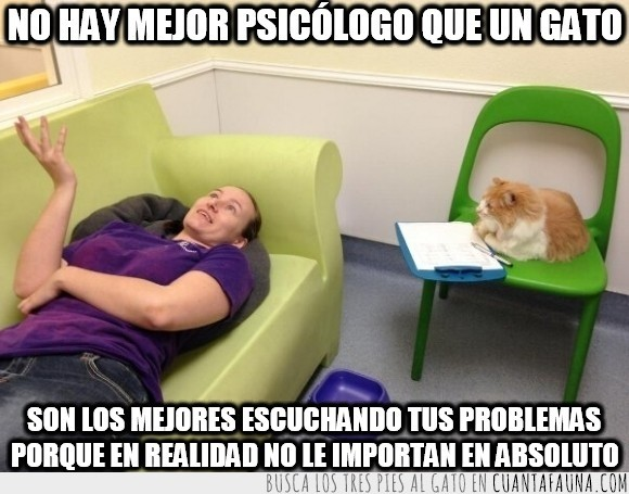 apuntar,explicar,feliz,gato,humano,paciente,psicologia,psicologo,psiquiatra,triste