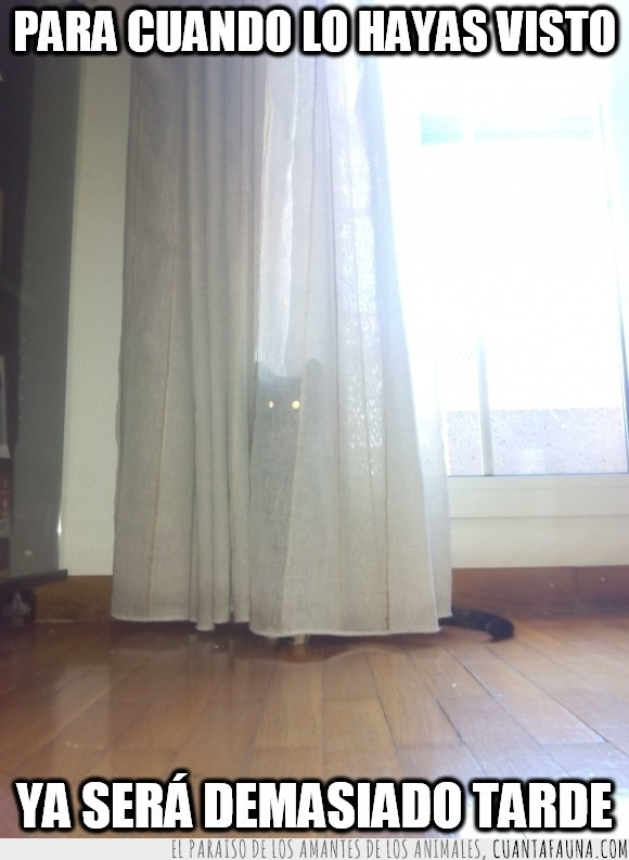cortina,detras,esconder,escondida,gatos,kira,mi gata,miedo,ninja,ojos