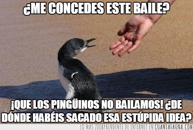 bailar,conceder,daño,estupida idea,pelicula,pingüino
