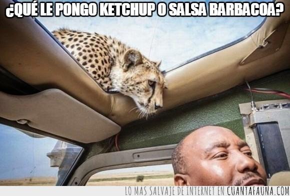asustar,coche,felino,guepardo,mirar,personas,sorpresa