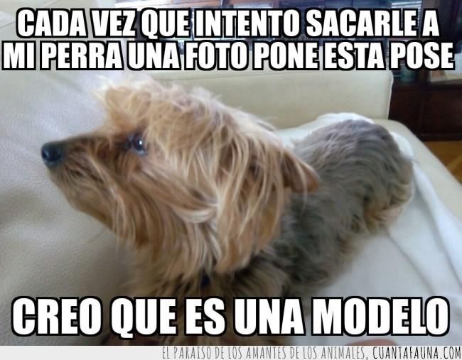 modelo,perra,perro,posar,pose,sacar fotos