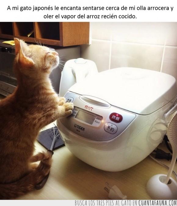 arrocera,arroz,caliente,calor,cocina,cocinar,dios,gato,rezar,vapor