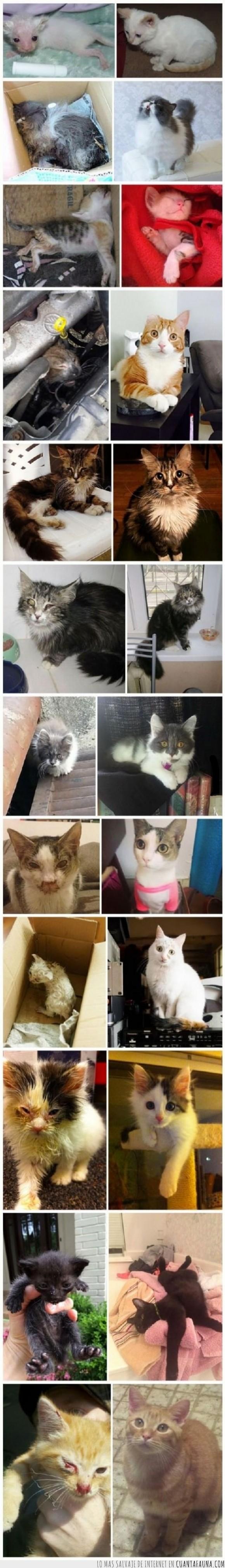 adopcion,adoptar,callejeros,Gatos,rescatar,rescate