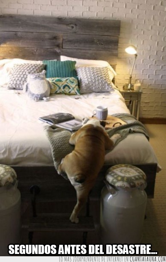 antes del desastre,caer,cafe,cama,mañana,manta,perro,sabana,subir,taza,tirar