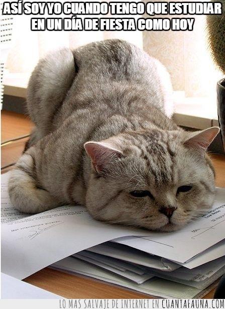 dia de fiesta,es el dia del trabajador no del estudiante,estudiar,examenes,festivo,finales