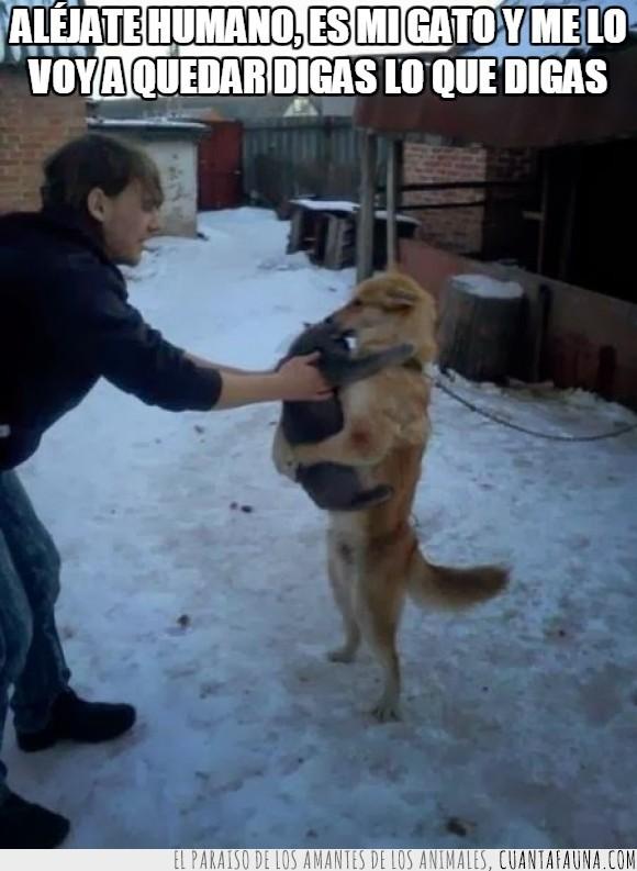 abrazo,cargar,coger,comer,comida,dueño,gato,humano,nieve,perro