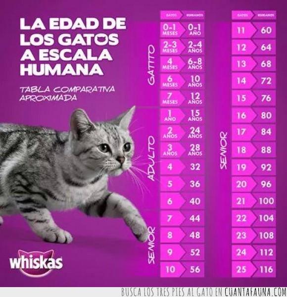 alimento,años,edad,Gato,persona,whiskas