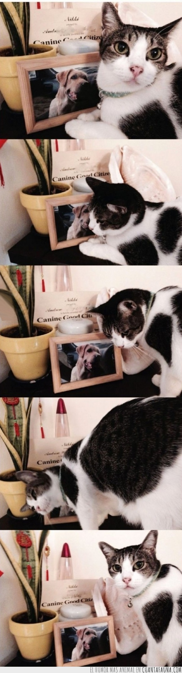 adiós,amistad,extrañar,foto,gato,morir,muerto,Perro