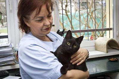 26247 - El gato enfermero