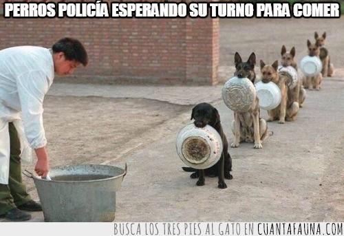 adorable,comida,cuenco,educados,esperar,perros,policía