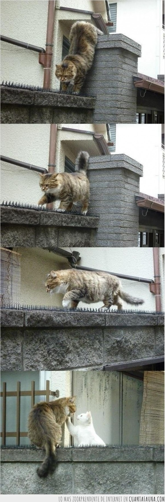 amor,gata,gato,muro,peligro,pinchar,pinchos,riesgo