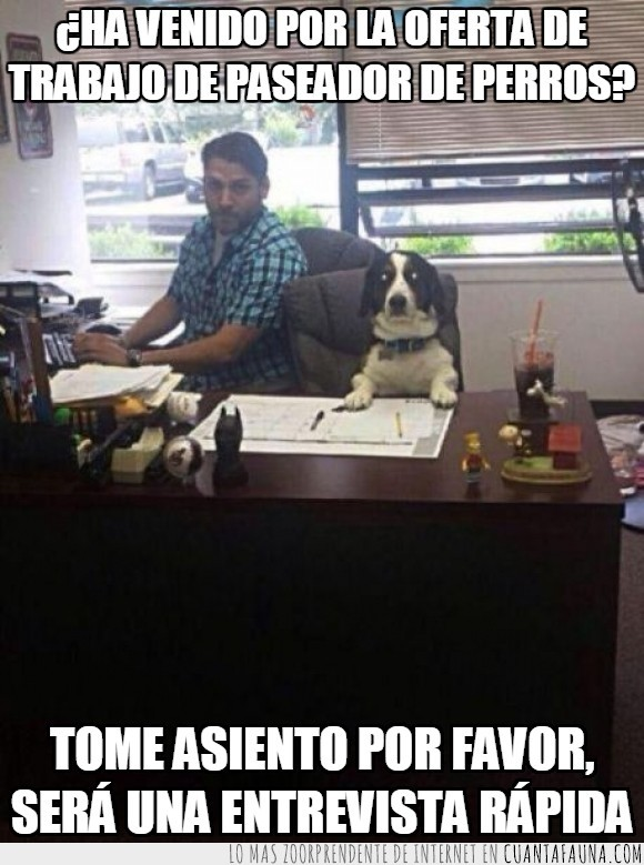 absurdo,Catherine,entrevista,mesa,oferta de trabajo,oficina,paseador de perros,perro,reunion,secretario,semana,trabajar,trabajo,viene