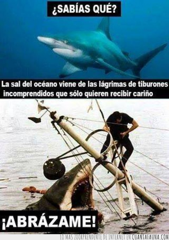 abrazo,lágrimas,llorando,llorar,los tiburones molan,sal,salado,tiburon,triste