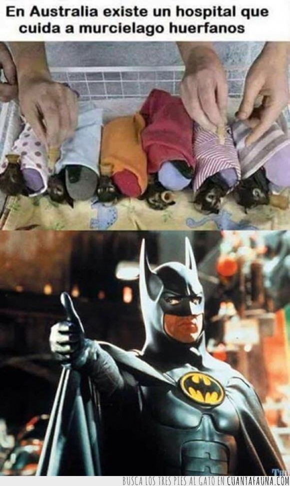 :D,Australia,ayuda,Batman,huerfanos,murciélagos,nanananna!